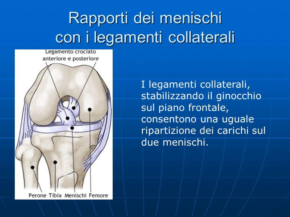 Rapporti dei menischi con i legamenti collaterali I legamenti collaterali, stabilizzando il ginocchio sul piano frontale, consentono una uguale ripart