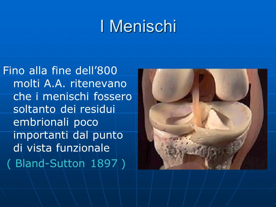 I Menischi Fino alla fine dell800 molti A.A. ritenevano che i menischi fossero soltanto dei residui embrionali poco importanti dal punto di vista funz