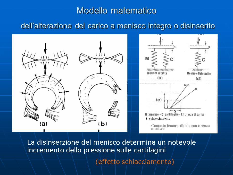 Modello matematico dellalterazione del carico a menisco integro o disinserito La disinserzione del menisco determina un notevole incremento dello pres