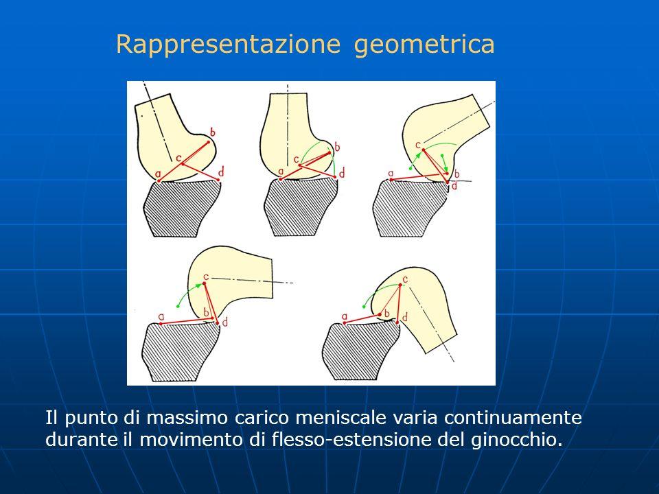 Il punto di massimo carico meniscale varia continuamente durante il movimento di flesso-estensione del ginocchio. Rappresentazione geometrica