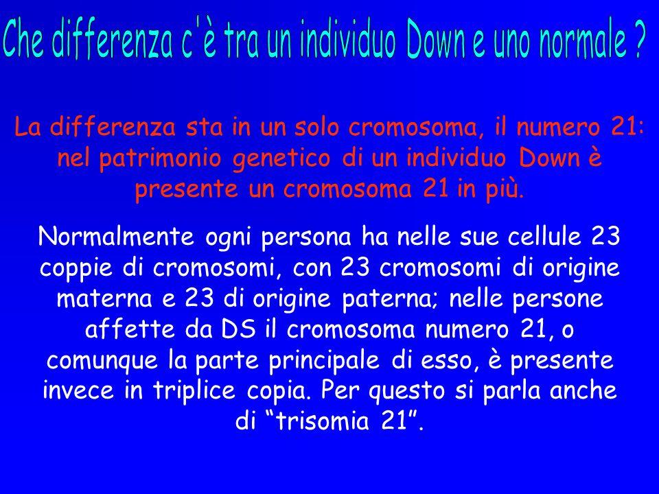 La differenza sta in un solo cromosoma, il numero 21: nel patrimonio genetico di un individuo Down è presente un cromosoma 21 in più. Normalmente ogni