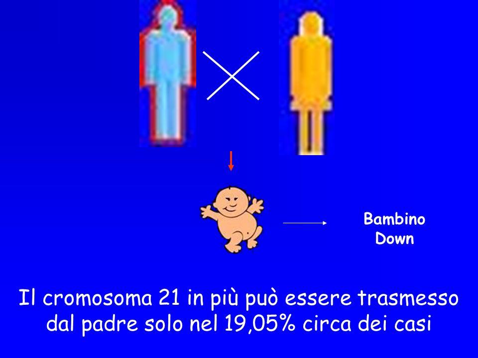 Il cromosoma 21 in più può essere trasmesso dal padre solo nel 19,05% circa dei casi Bambino Down