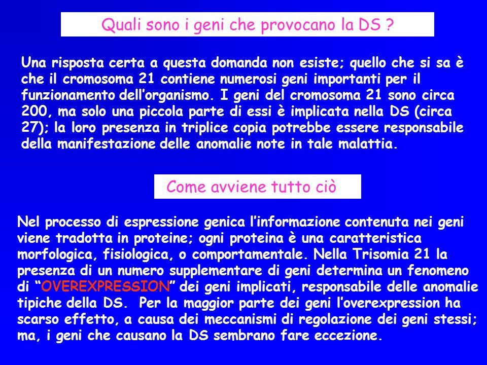 Quali sono i geni che provocano la DS ? Una risposta certa a questa domanda non esiste; quello che si sa è che il cromosoma 21 contiene numerosi geni