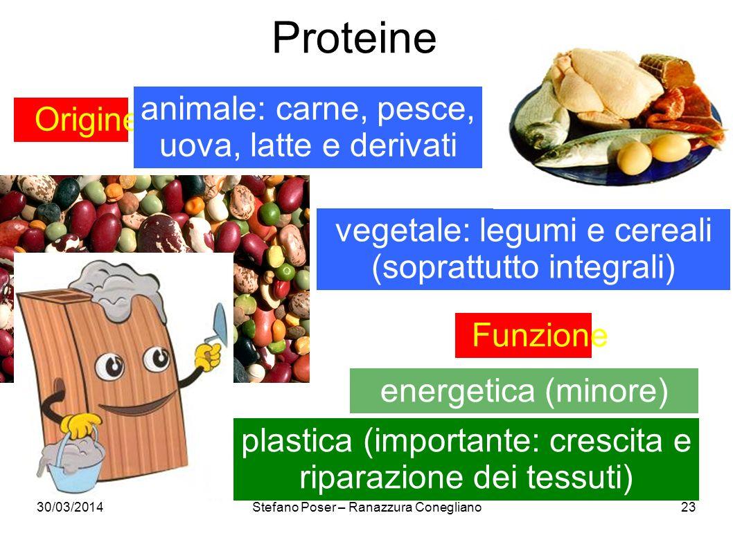 30/03/2014Stefano Poser – Ranazzura Conegliano23 Proteine Origine animale: carne, pesce, uova, latte e derivati vegetale: legumi e cereali (soprattutt