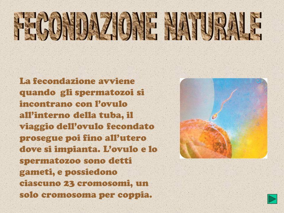 Fecondazione naturale: ovociti, spermatozoi, sterilità maschile e femminileFecondazione naturale ovocitispermatozoi, sterilità maschile e femminile Fe