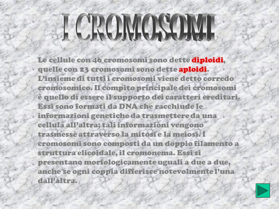 diploidi aploidi Le cellule con 46 cromosomi sono dette diploidi, quelle con 23 cromosomi sono dette aploidi.