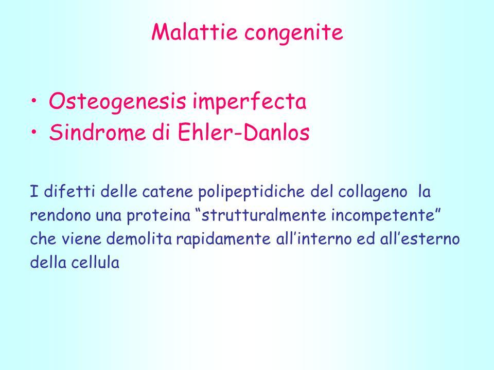 Malattie congenite Osteogenesis imperfecta Sindrome di Ehler-Danlos I difetti delle catene polipeptidiche del collageno la rendono una proteina strutturalmente incompetente che viene demolita rapidamente allinterno ed allesterno della cellula
