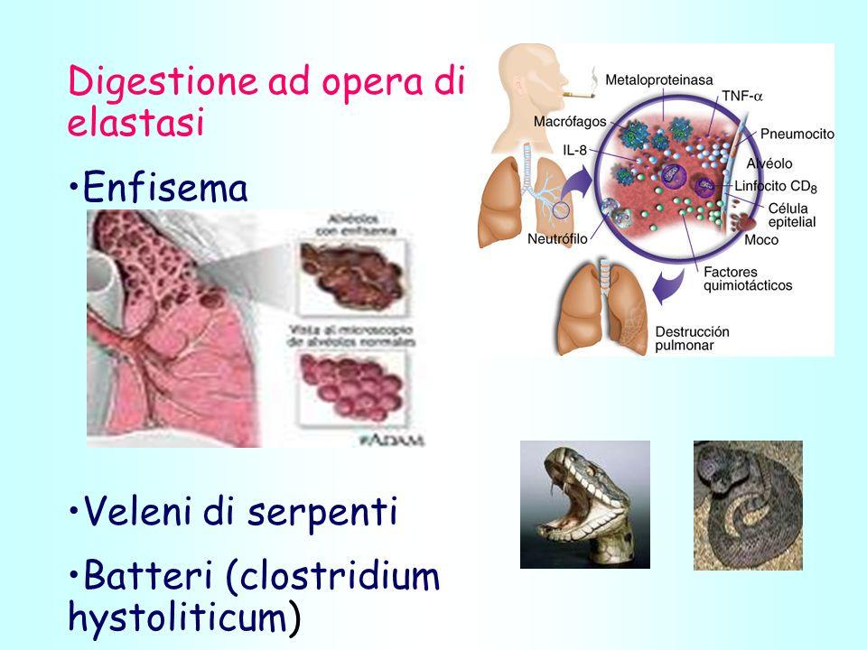 Digestione ad opera di elastasi Enfisema Veleni di serpenti Batteri (clostridium hystoliticum)
