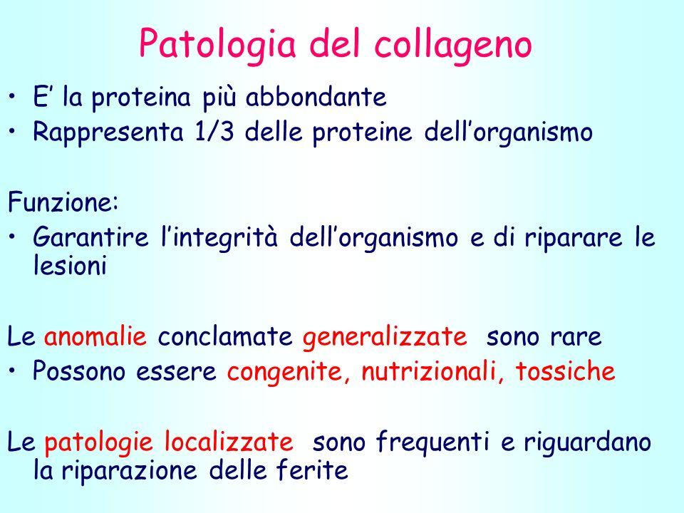 Patologia del collageno E la proteina più abbondante Rappresenta 1/3 delle proteine dellorganismo Funzione: Garantire lintegrità dellorganismo e di riparare le lesioni Le anomalie conclamate generalizzate sono rare Possono essere congenite, nutrizionali, tossiche Le patologie localizzate sono frequenti e riguardano la riparazione delle ferite