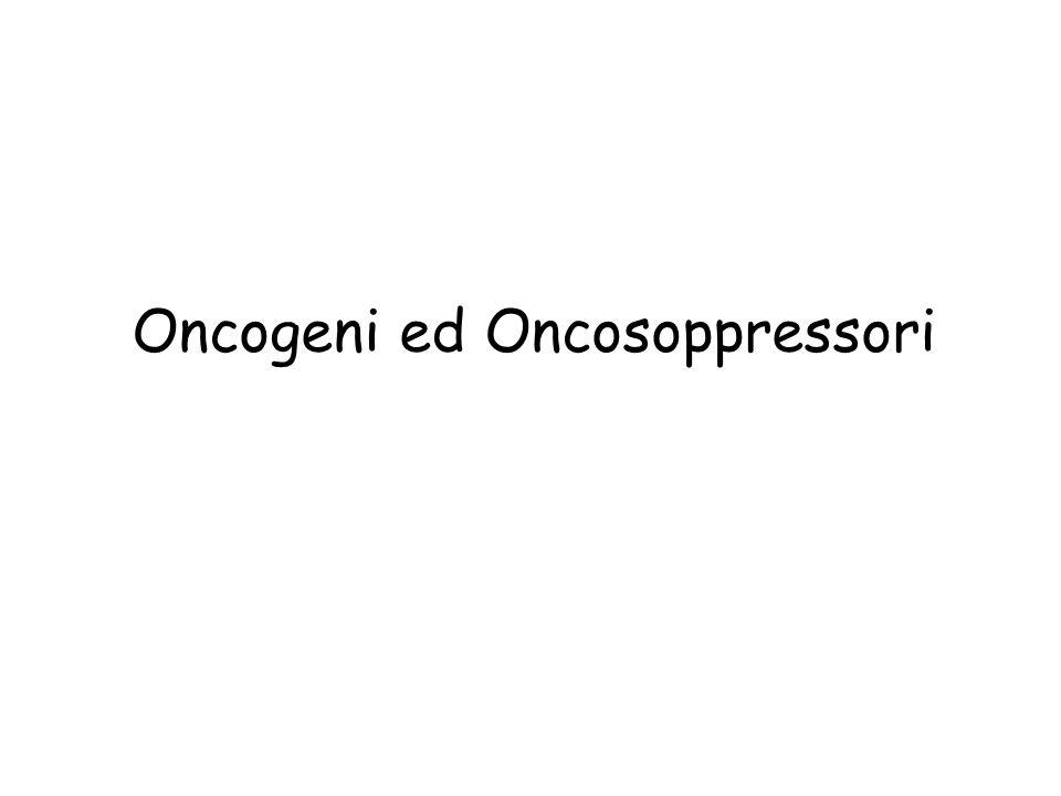 Oncogeni ed Oncosoppressori