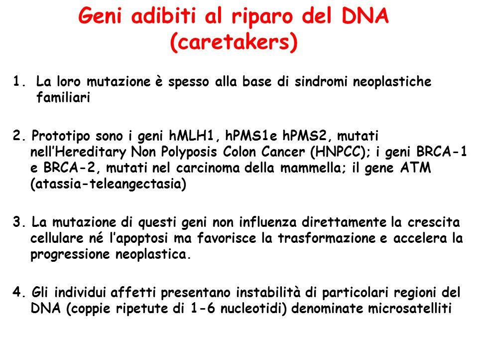 Geni adibiti al riparo del DNA (caretakers) 1.La loro mutazione è spesso alla base di sindromi neoplastiche familiari 2. Prototipo sono i geni hMLH1,