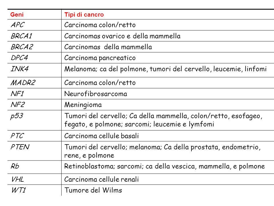 GeniTipi di cancro APCCarcinoma colon/retto BRCA1Carcinomas ovarico e della mammella BRCA2Carcinomas della mammella DPC4Carcinoma pancreatico INK4Melanoma; ca del polmone, tumori del cervello, leucemie, linfomi MADR2Carcinoma colon/retto NF1Neurofibrosarcoma NF2Meningioma p53Tumori del cervello; Ca della mammella, colon/retto, esofageo, fegato, e polmone; sarcomi; leucemie e lymfomi PTCCarcinoma cellule basali PTENTumori del cervello; melanoma; Ca della prostata, endometrio, rene, e polmone RbRetinoblastoma; sarcomi; ca della vescica, mammella, e polmone VHLCarcinoma cellule renali WT1Tumore del Wilms