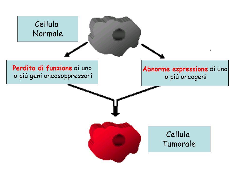 Cellula Normale Cellula Tumorale Perdita di funzione di uno o più geni oncosoppressori Abnorme espressione di uno o più oncogeni