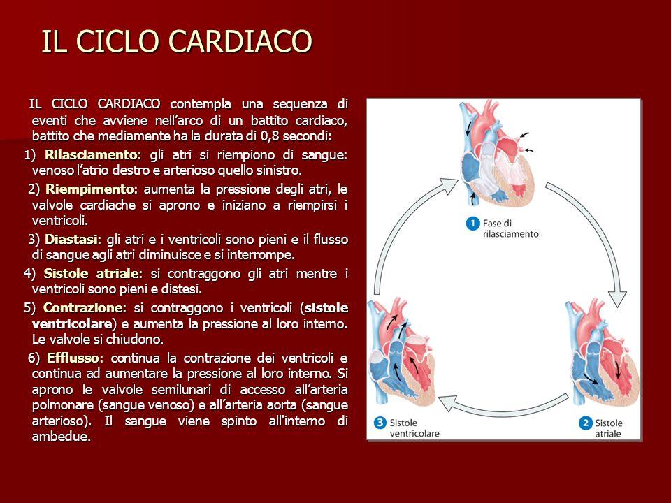 IL CICLO CARDIACO IL CICLO CARDIACO contempla una sequenza di eventi che avviene nellarco di un battito cardiaco, battito che mediamente ha la durata