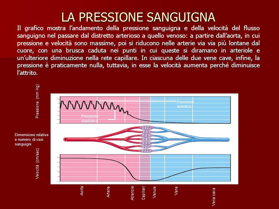 LA PRESSIONE SANGUIGNA sono massime, poi si riducono nelle arterie via via più lontane dal cuore, con una brusca caduta nei punti in cui queste si dir