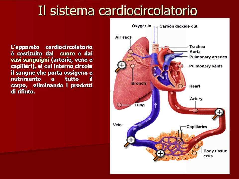 IL CICLO CARDIACO IL CICLO CARDIACO contempla una sequenza di eventi che avviene nellarco di un battito cardiaco, battito che mediamente ha la durata di 0,8 secondi: IL CICLO CARDIACO contempla una sequenza di eventi che avviene nellarco di un battito cardiaco, battito che mediamente ha la durata di 0,8 secondi: 1) Rilasciamento: gli atri si riempiono di sangue: venoso latrio destro e arterioso quello sinistro.