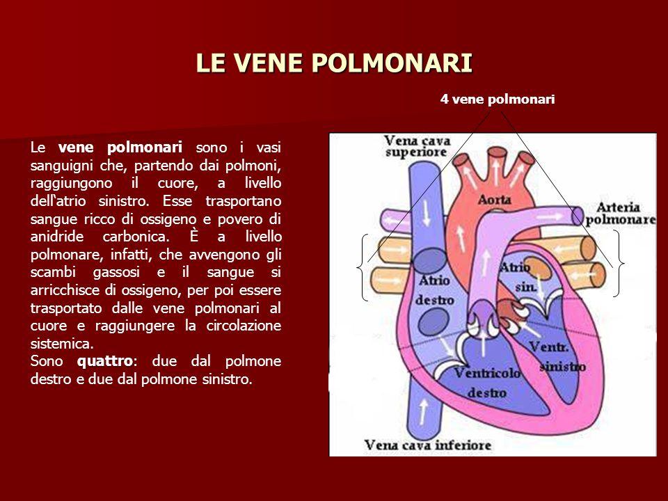 LE VENE POLMONARI Le vene polmonari sono i vasi sanguigni che, partendo dai polmoni, raggiungono il cuore, a livello dellatrio sinistro. Esse trasport