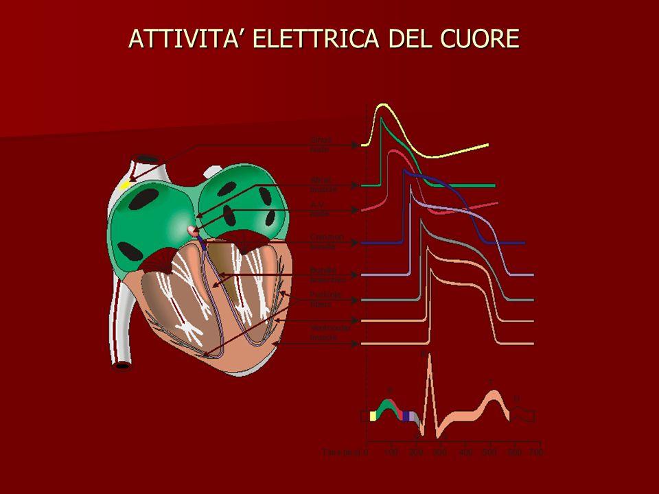 ATTIVITA ELETTRICA DEL CUORE 1 234