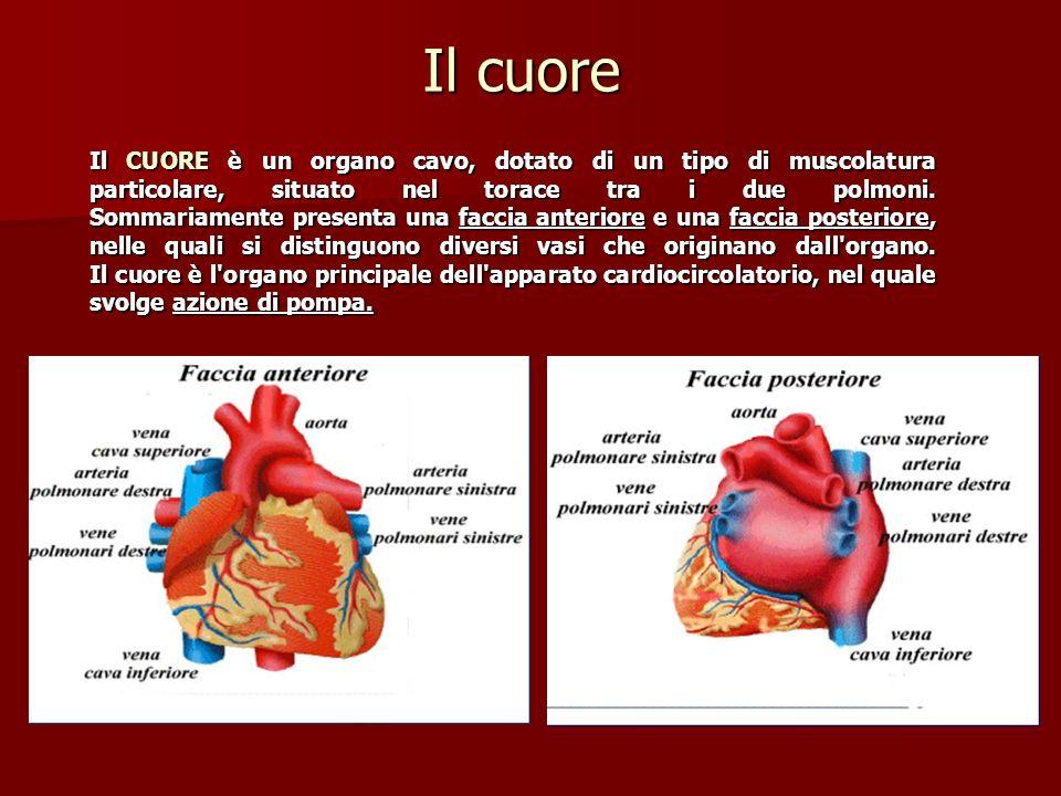 miocardio Le pareti del cuore sono costituite da un particolare tipo di muscolo, il muscolo cardiaco, detto miocardio, e sono rivestite da tre membrane: endocardio - lendocardio (allinterno) una sottile membrana endoteliale epicardio - epicardio (allesterno), una sottile e trasparente pellicola connettivale pericardio - e da una membrana di rivestimento connettivale: il pericardio.