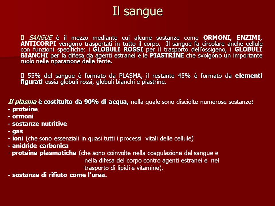 Il sangue Il SANGUE è il mezzo mediante cui alcune sostanze vengono trasportati in tutto il corpo. Il sangue fa circolare anche cellule con funzioni s