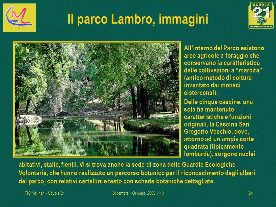 ITIS Molinari - Scuola 21Dicembre - Gennaio 2009 - '1024 Il parco Lambro, immagini Allinterno del Parco esistono aree agricole a foraggio che conserva