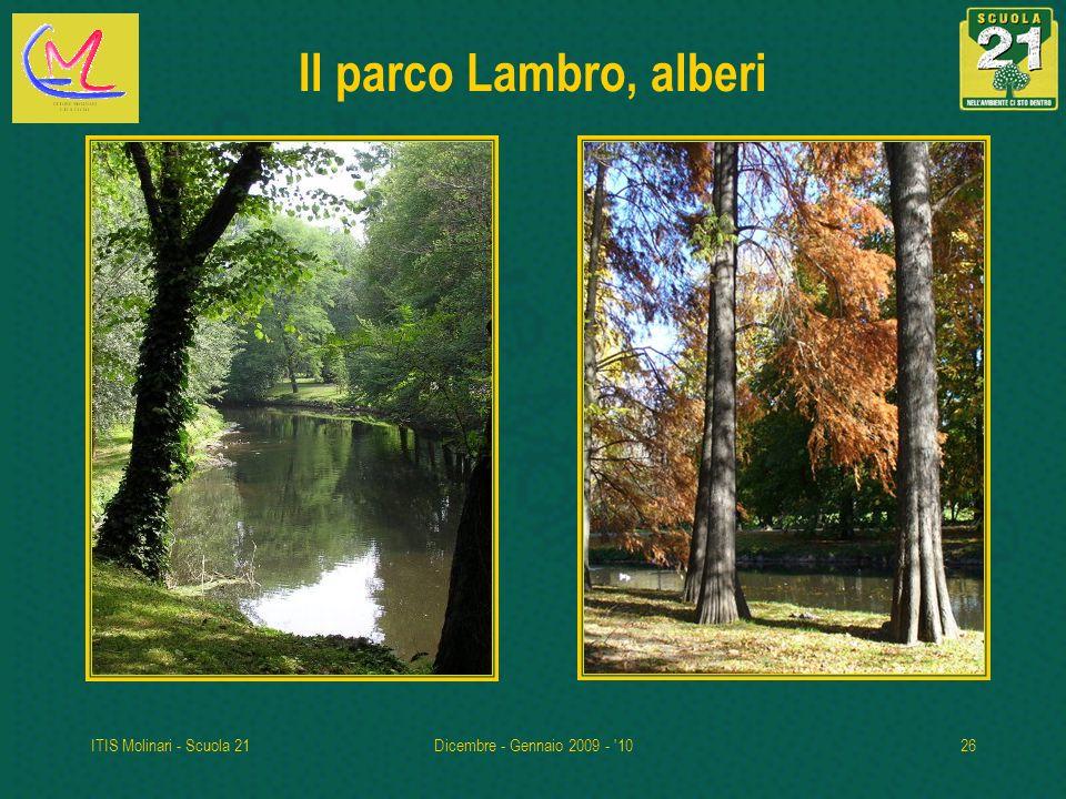 ITIS Molinari - Scuola 21Dicembre - Gennaio 2009 - '1026 Il parco Lambro, alberi