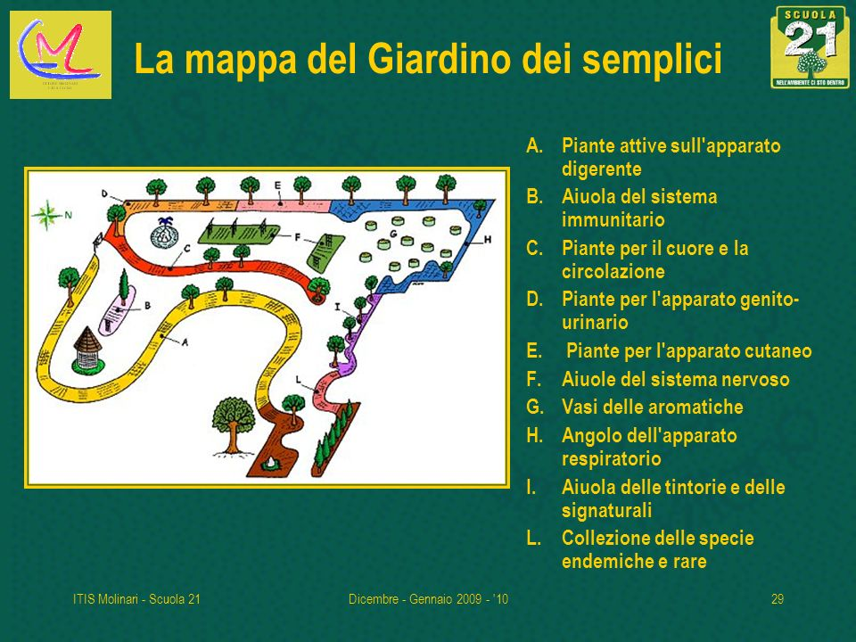 ITIS Molinari - Scuola 21Dicembre - Gennaio 2009 - '1029 La mappa del Giardino dei semplici A.Piante attive sull'apparato digerente B.Aiuola del siste