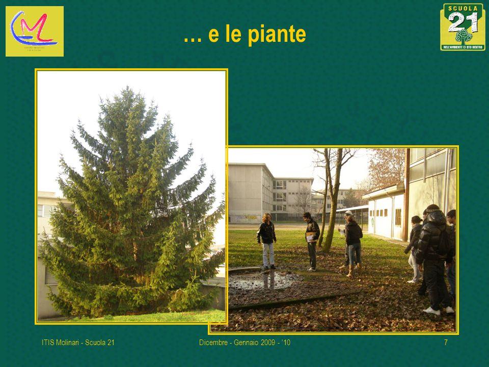 ITIS Molinari - Scuola 21Dicembre - Gennaio 2009 - '107 … e le piante
