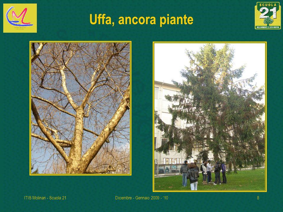 ITIS Molinari - Scuola 21Dicembre - Gennaio 2009 - '108 Uffa, ancora piante