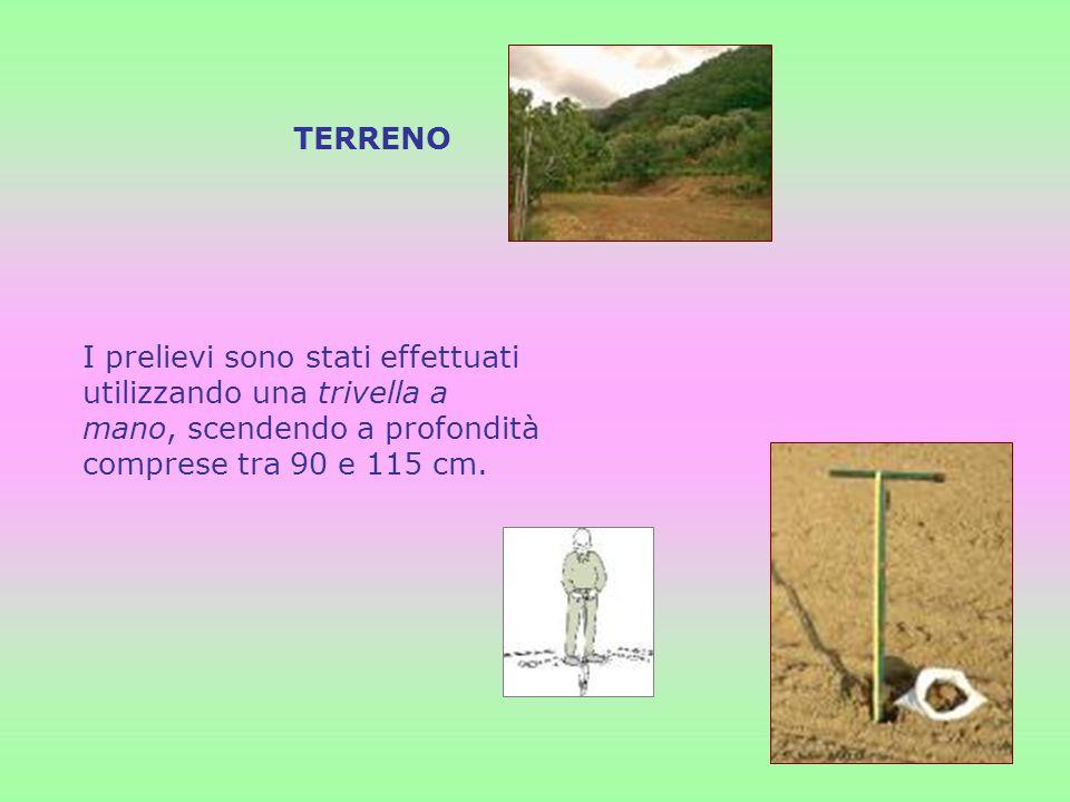 TERRENO I prelievi sono stati effettuati utilizzando una trivella a mano, scendendo a profondità comprese tra 90 e 115 cm.