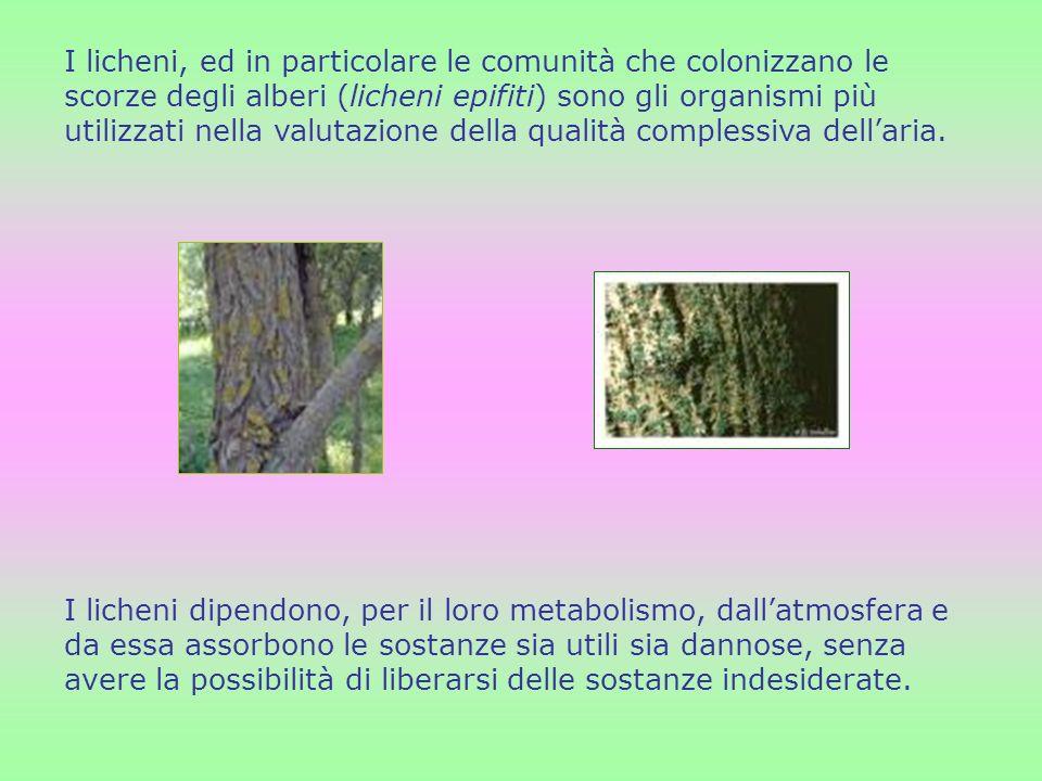 I licheni, ed in particolare le comunità che colonizzano le scorze degli alberi (licheni epifiti) sono gli organismi più utilizzati nella valutazione