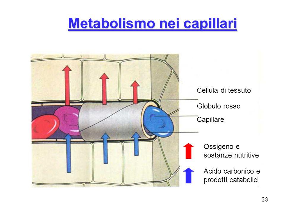 33 Metabolismo nei capillari Cellula di tessuto Globulo rosso Capillare Ossigeno e sostanze nutritive Acido carbonico e prodotti catabolici