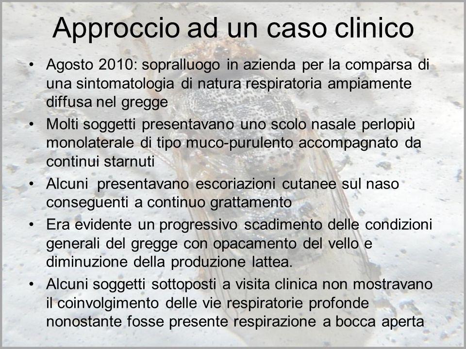 Approccio ad un caso clinico Agosto 2010: sopralluogo in azienda per la comparsa di una sintomatologia di natura respiratoria ampiamente diffusa nel g