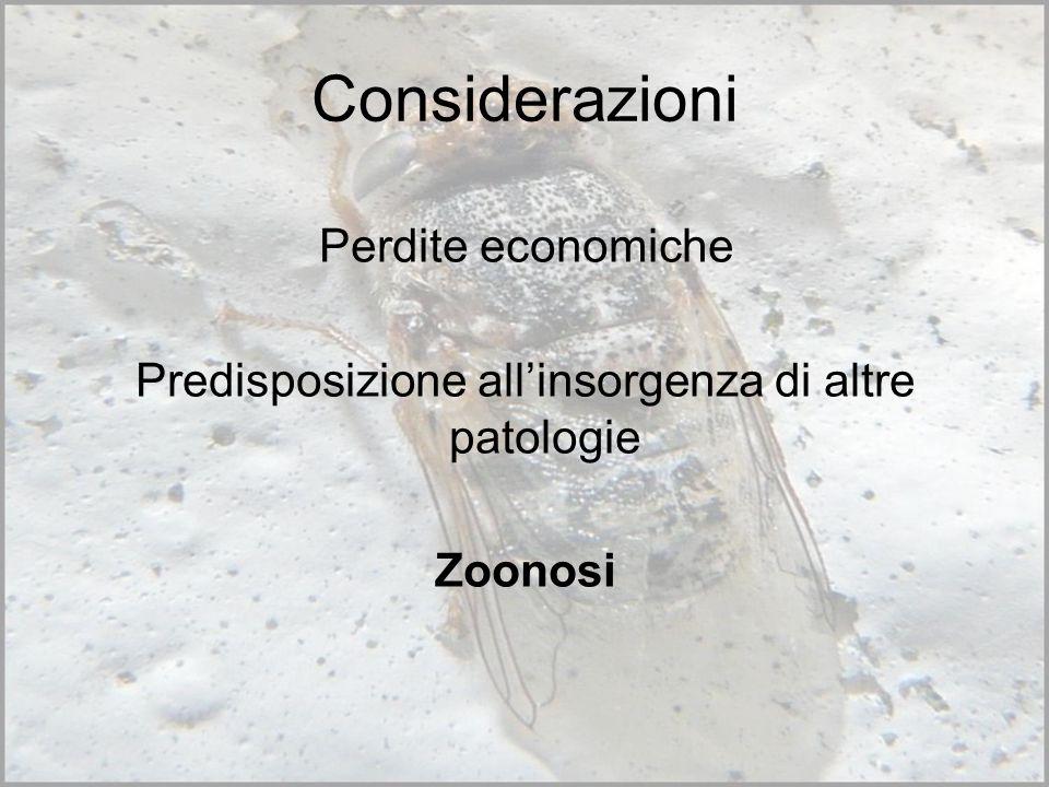 Considerazioni Perdite economiche Predisposizione allinsorgenza di altre patologie Zoonosi