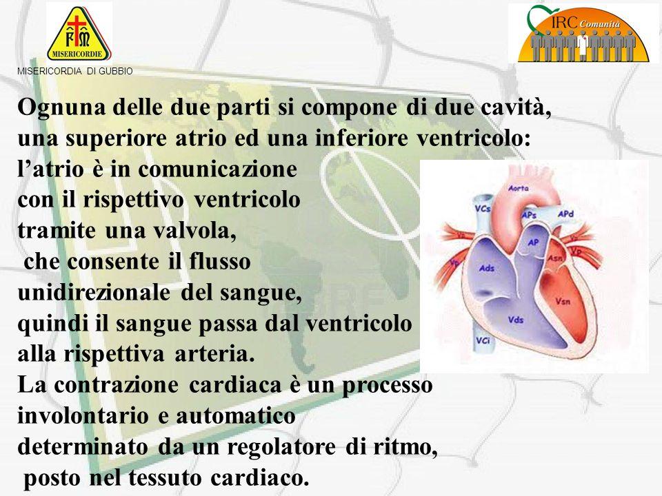 MISERICORDIA DI GUBBIO Il cuore è un muscolo, miocardio, delle dimensioni di un pugno, posizionato al centro della cavità toracica, fra i due polmoni,
