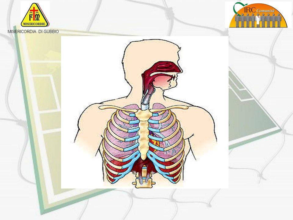 MISERICORDIA DI GUBBIO I polmoni sono contenuti allinterno della gabbia toracica (costituita da coste, sterno, vertebre e tessuto muscolare e di soste