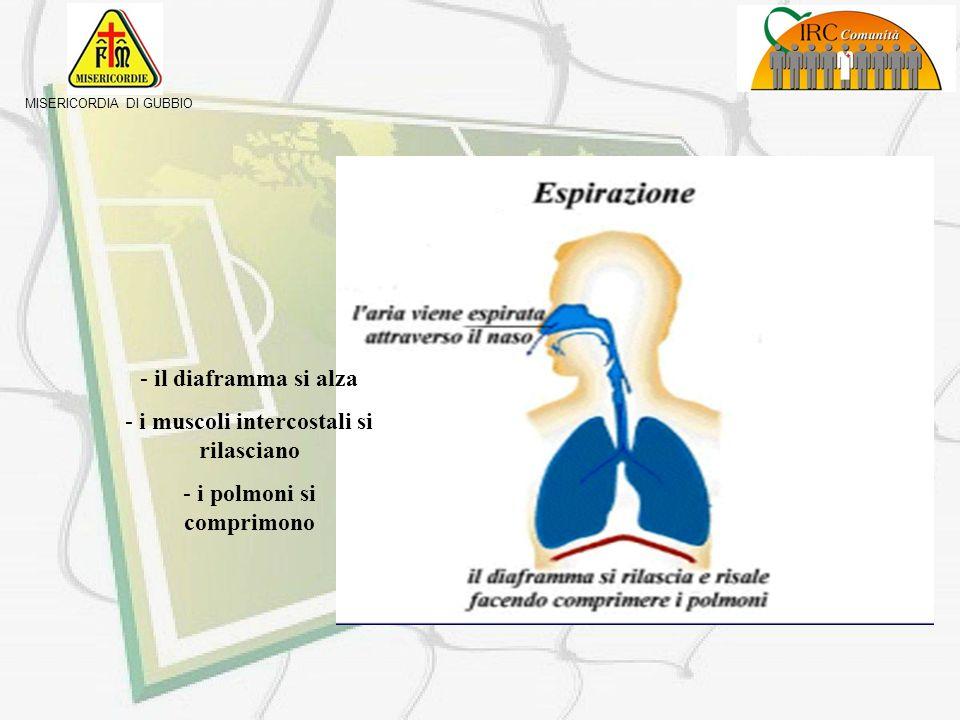 -Il diaframma si abbassa - i muscoli intercostali si contraggono - i polmoni si dilatano