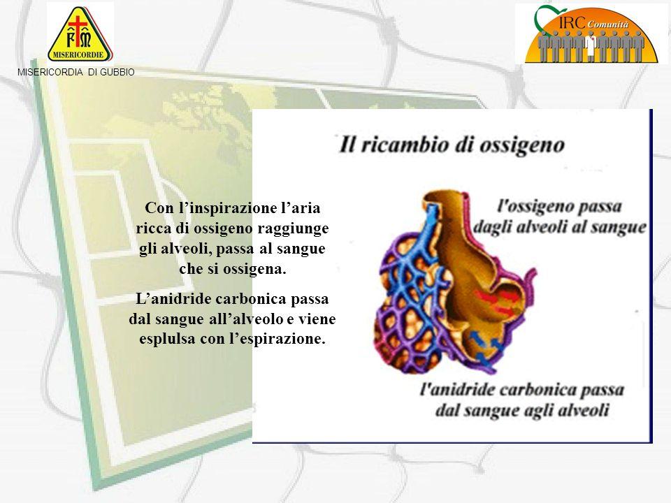 MISERICORDIA DI GUBBIO - il diaframma si alza - i muscoli intercostali si rilasciano - i polmoni si comprimono