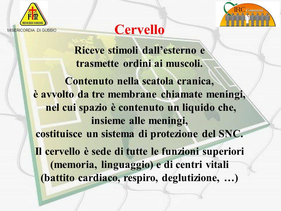 MISERICORDIA DI GUBBIO Sistema nervoso E una struttura complessa che si suddivide in SNC (Sistema Nervoso Centrale) SNP (Sistema nervoso Periferico) C
