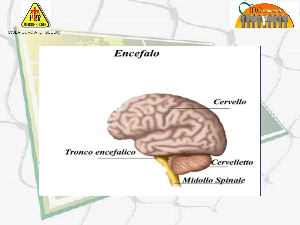 MISERICORDIA DI GUBBIO Alla base del cervello è posto il tronco cerebrale, che regola lattività respiratoria e circolatoria ed il cervelletto che coor