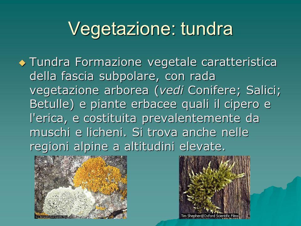 Vegetazione: tundra Tundra Formazione vegetale caratteristica della fascia subpolare, con rada vegetazione arborea (vedi Conifere; Salici; Betulle) e