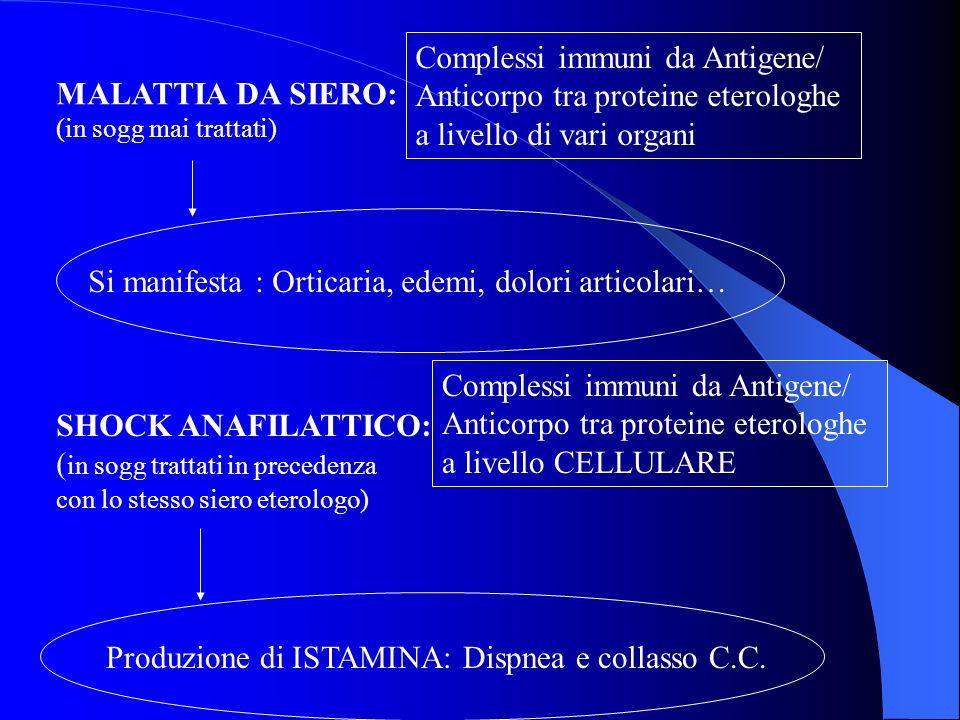 MALATTIA DA SIERO: (in sogg mai trattati) Complessi immuni da Antigene/ Anticorpo tra proteine eterologhe a livello di vari organi Si manifesta : Orti