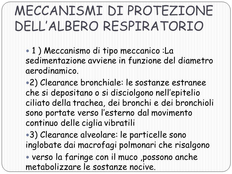 MECCANISMI DI PROTEZIONE DELLALBERO RESPIRATORIO 1 ) Meccanismo di tipo meccanico :La sedimentazione avviene in funzione del diametro aerodinamico. 2)