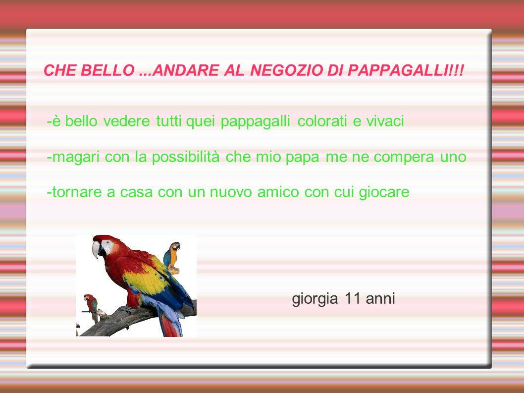 CHE BELLO...ANDARE AL NEGOZIO DI PAPPAGALLI!!! -è bello vedere tutti quei pappagalli colorati e vivaci -magari con la possibilità che mio papa me ne c