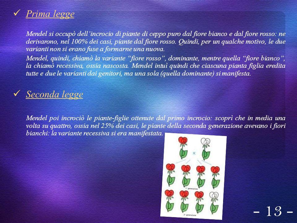 Prima legge Mendel si occupò dellincrocio di piante di ceppo puro dal fiore bianco e dal fiore rosso: ne derivarono, nel 100% dei casi, piante dal fio
