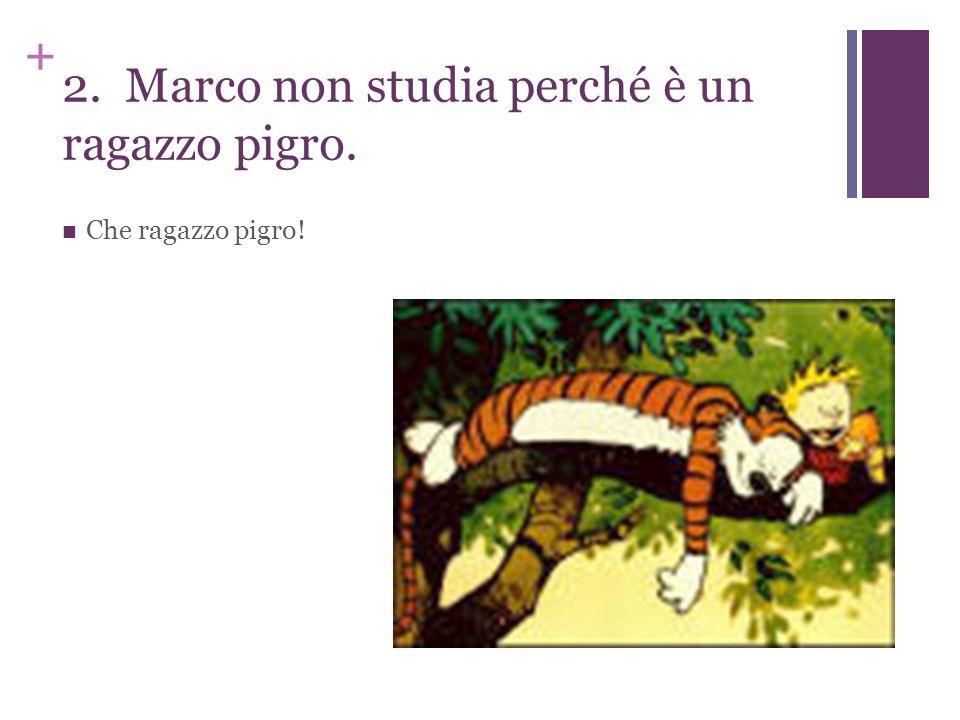 + 2. Marco non studia perché è un ragazzo pigro. Che ragazzo pigro!