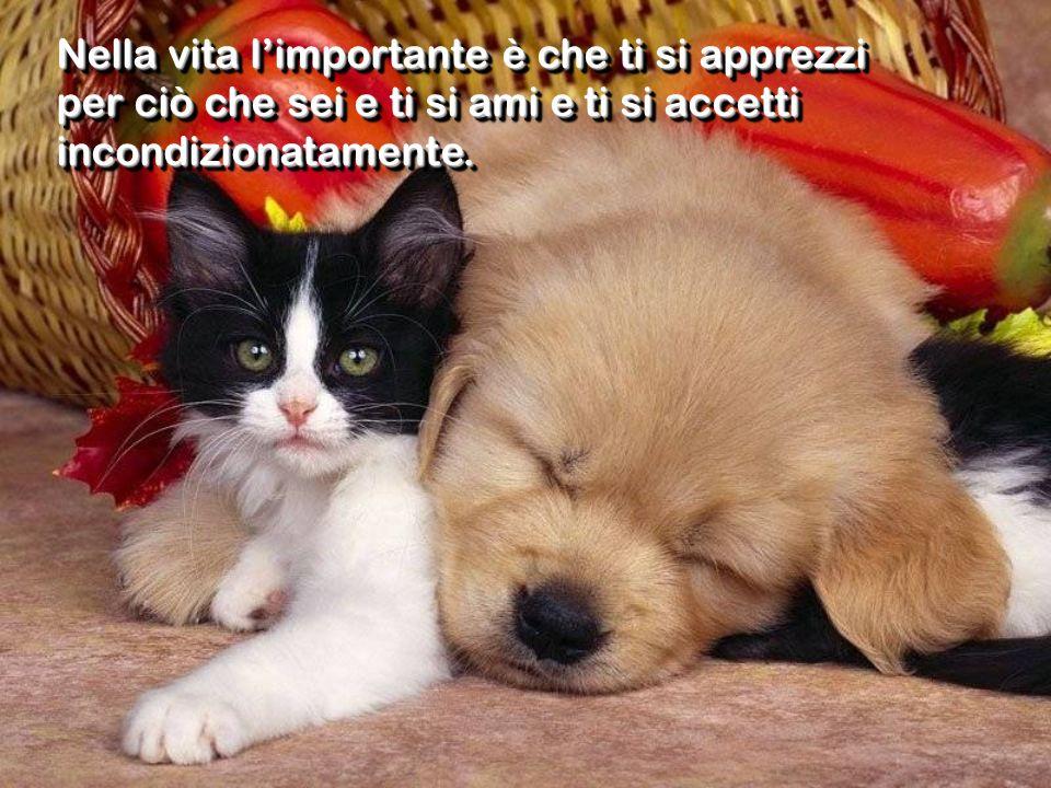 Nella vita limportante è che ti si apprezzi per ciò che sei e ti si ami e ti si accetti incondizionatamente.