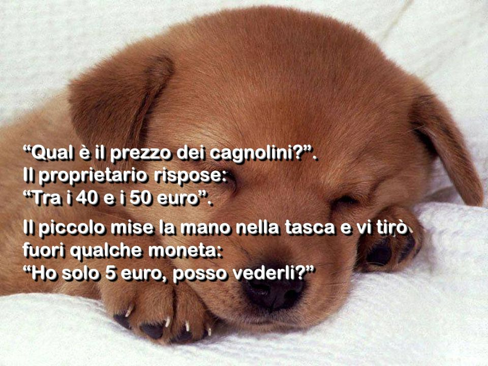 Qual è il prezzo dei cagnolini?. Il proprietario rispose: Tra i 40 e i 50 euro. Il piccolo mise la mano nella tasca e vi tirò fuori qualche moneta: Ho