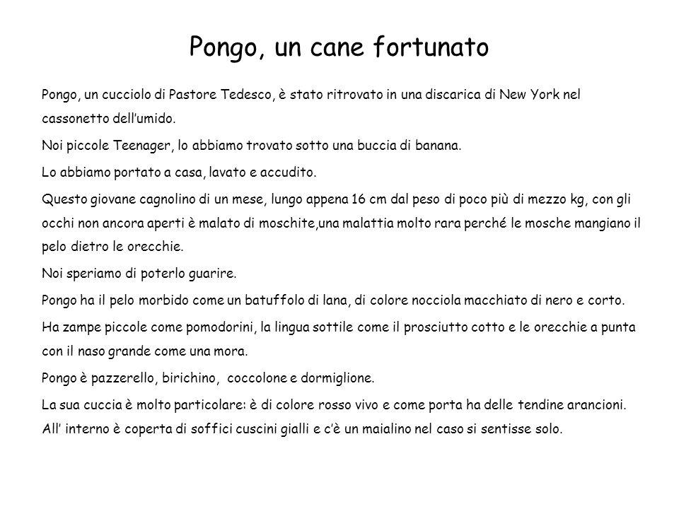 Pongo, un cane fortunato Pongo, un cucciolo di Pastore Tedesco, è stato ritrovato in una discarica di New York nel cassonetto dellumido. Noi piccole T
