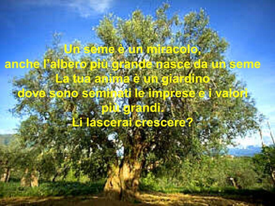 Un seme è un miracolo, anche lalbero più grande nasce da un seme La tua anima è un giardino dove sono seminati le imprese e i valori più grandi.